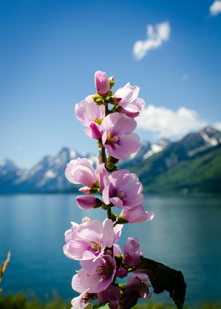 Wyoming - Grand Teton-11