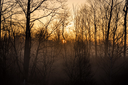 morning trees forest sunrise spring foggy d800