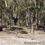 Viajefilos en Australia. Adelaida 39
