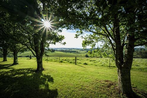 nsw greenhill dorrigo hillsview sony1018mmf4 sonye1018mmf4oss sonya6000 sonyilce6000