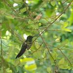 Mo, 13.04.15 - 08:58 - Kolibri