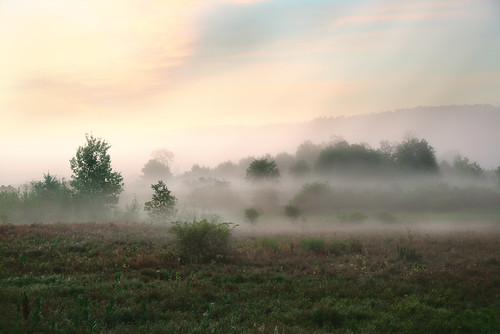 morning mist fog sunrise field trees grass massachusetts spencer nikon nikkor chancyrendezvous davelawler blurgasm lawler