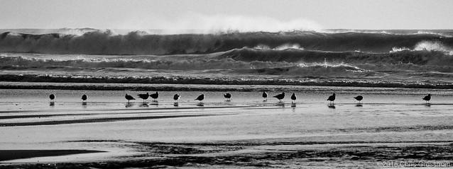 Seagulls in the Surf - Nikon FE - Nikkor-Q·C 200mm f/4 - TMAX 100