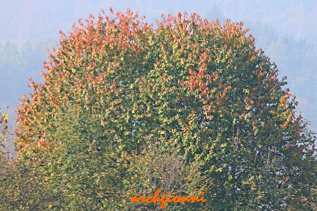 una punta di autunno