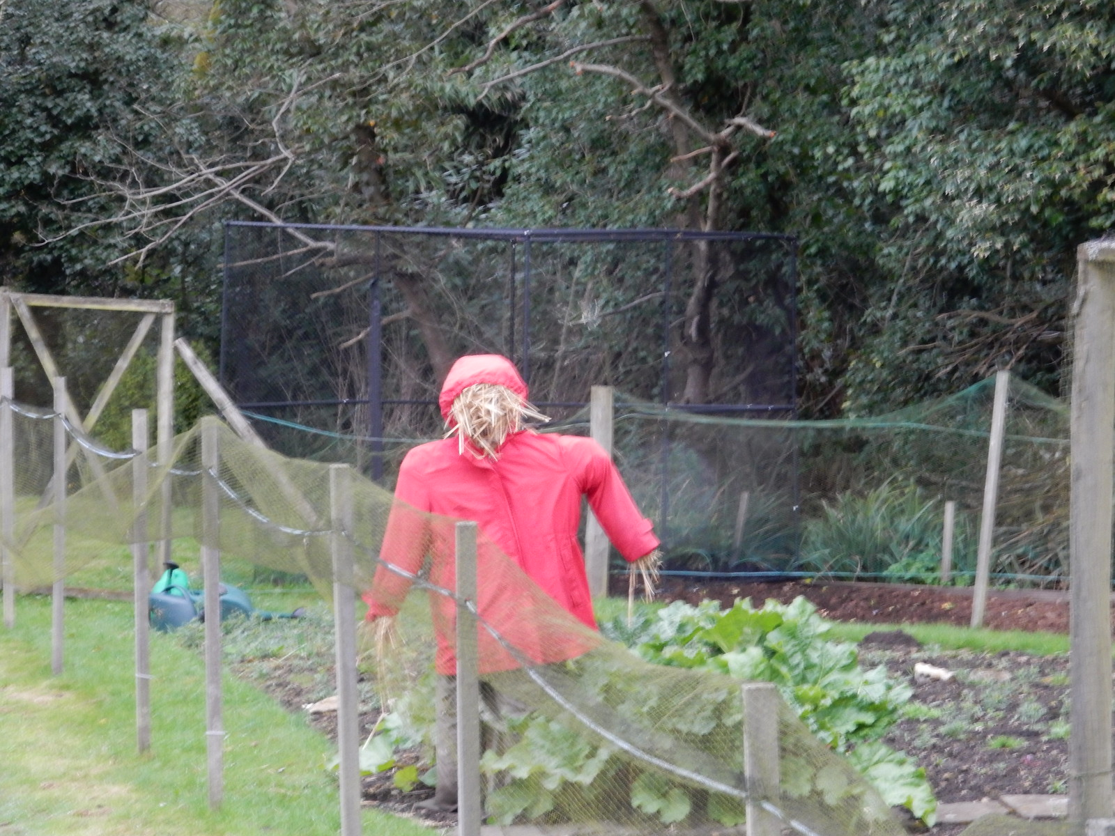 Don't Look Now Gomshall to Guildford Shere scarecrow