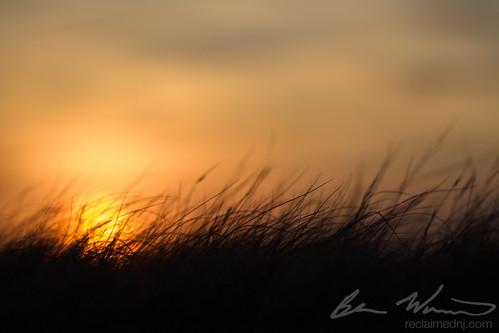 sunset newjersey spartina 2015 patens burlingtoncounty newgretna canon7d bassrivertownship