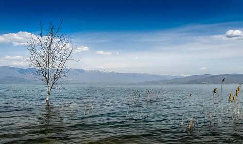 sky mountain lake tree clouds landscape flood bluesky macedonia cloudscape singletree flooded lakedojran