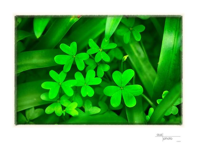 Green Shapes