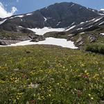 Flower Meadow below Mt. Jackson