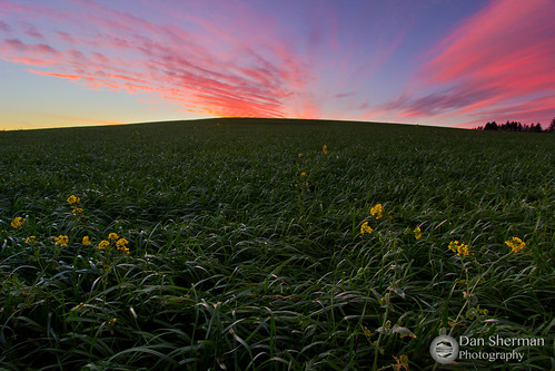 sunset sky green field grass clouds oregon rural landscape spring colorful unitedstates farm farmland buenavista independence willamette willamettevalley colorfulsunset colorfulsky ruralscene rurallandscape independenceoregon buenavistaoregon