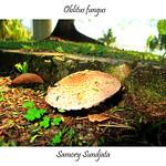 Oblitus fungus