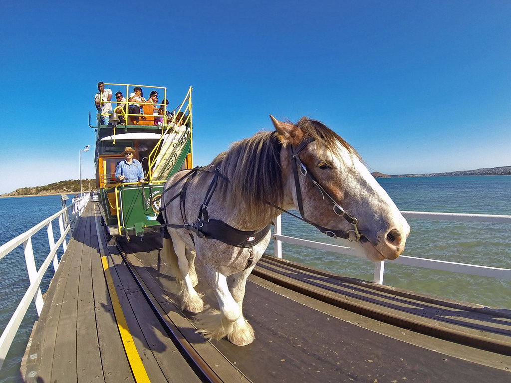 Granite Island Horse Tram by Tom Marschall
