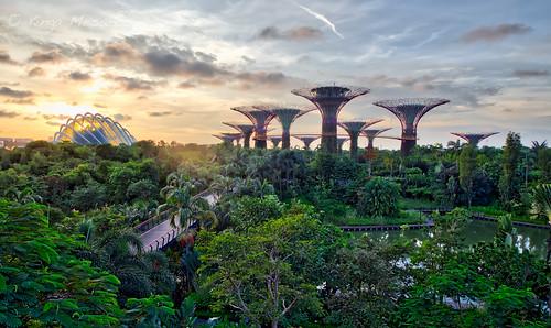 singapore cityscape park gardensbythebay