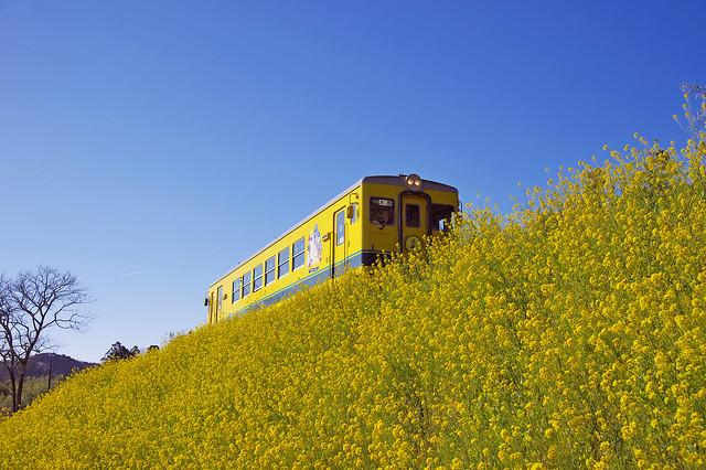Isumi railway of spring