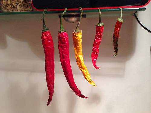 87/365 Accidentally home dried chillies | by Anetq