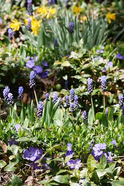 木, 2015-04-16 14:44 - Brooklyn Botanic Garden