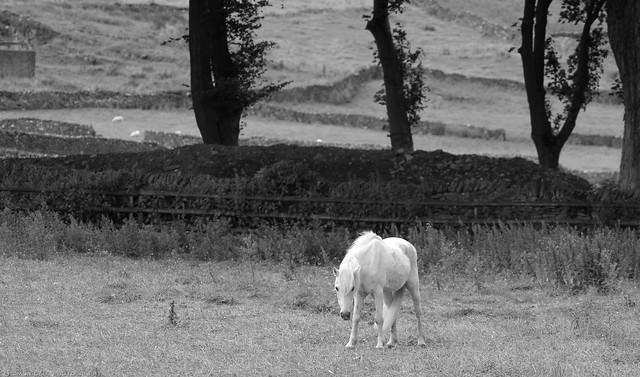 little pony castleton derbyshire