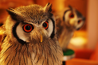 owl cafe 01 | by yhy_jp