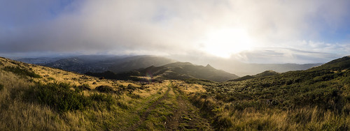 newzealand panorama grass sunshine yellow fog skyline clouds track trail wellington tussock contrejour kaukau