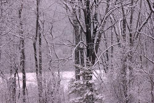 trees snow tree spring transient fleetingbeauty