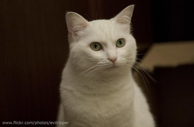 Grumpy cat mode on
