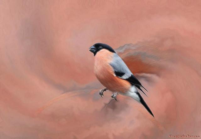 Feathered Art