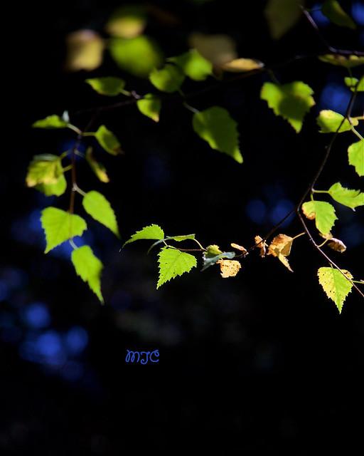 Couronne de lumière... Crown of Light ...