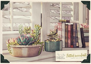 Potted succulents | by mochi / vespertine