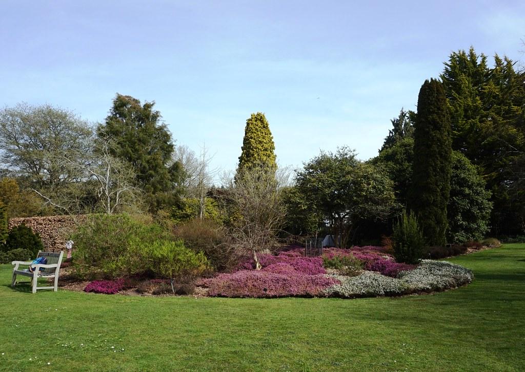 Heather in Sir Harold Hillier Gardens 4
