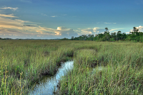 Sawgrass Prairie NPS Photo G. Gardner | by evergladesnps