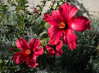 Oakland Flowers | by sooz