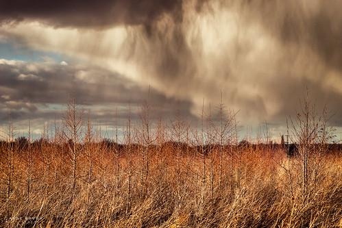 wood trees england rain weather clouds woodland shower unitedkingdom sony gb saplings longwittenham a99 sonyalpha andyhough paradisewood earthtrust slta99v andyhoughphotography