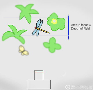 Depth of Field (DOF) illustrated | by Pixels Dimension