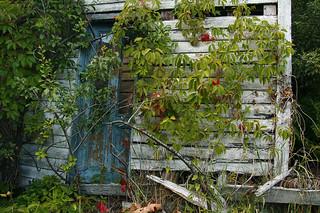 Autumn in a backyard in Mandal