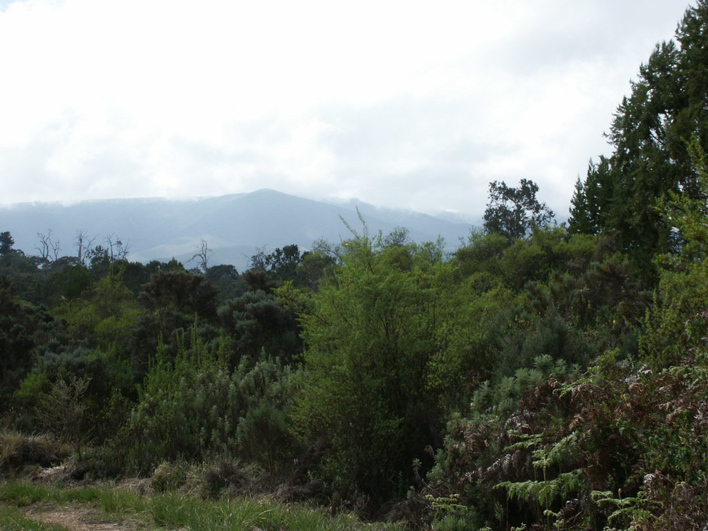 Woodland landscape at around 2500m.