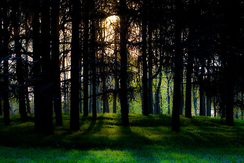park trees sunset italy parco milan green gold woods italia tramonto shadows milano ombra ombre italie oro foresta
