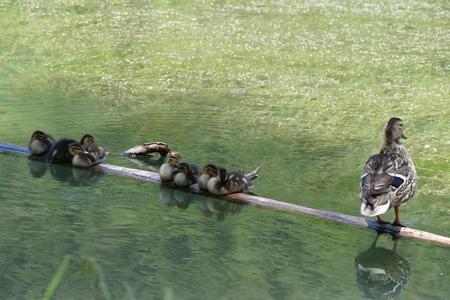 08.03.16.Lac de Montriond