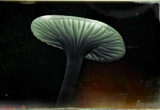 Plutonium fungi