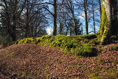 uk trees plants colour green nature wall landscape scotland moss europe unitedkingdom places beech lanarkshire beechleaves lesmahagow auchlochan