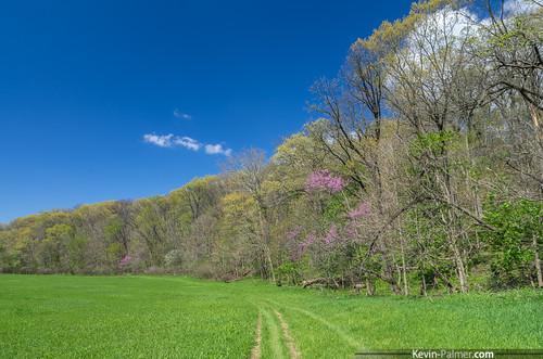 blue trees sky green grass clouds washington illinois spring path sunny april farmdale kevinpalmer pentaxk5 farmdalerecreationarea