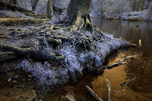 flowers blue trees river stones roots infrared forboding witchy tangled primordial florid fullspectrum r25a