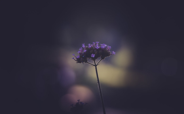 just a small violet flower