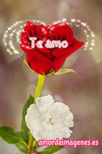 Rosas Con Movimiento Y Frases Hola Gente Enamorada El Día