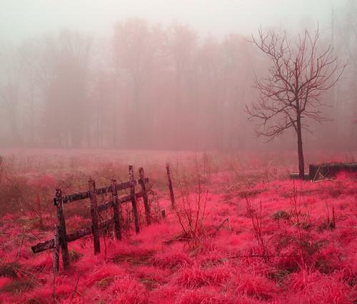 trees mist grass fog landscape spring nebel farm northcarolina infrared srural