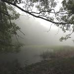 Fog PrePONDerance