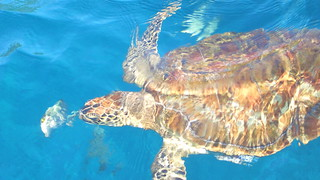 Thailand - Sea Turtle diving - Similan Islands | by Traveller-Reini