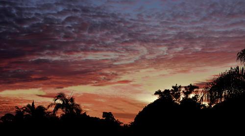 trees sunset sky panorama topf25 clouds twilight nikon outdoor dusk wide july bluesky bamboo palmtrees tamron pinksunset bundaberg redsunset 2016 2470mm yellowsunset panoramasunset d7200 tamronsp2470mmf28divcusd