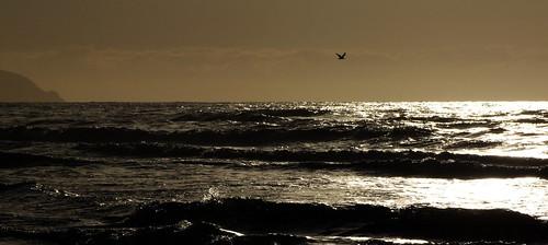 ocean sunset newzealand bird beach clouds seagull kapitiisland