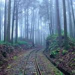 DAO-68042 嘉義縣,阿里山,二萬坪,二萬坪森林鐵道,森林步道,阿里山國家森林遊樂區,霧