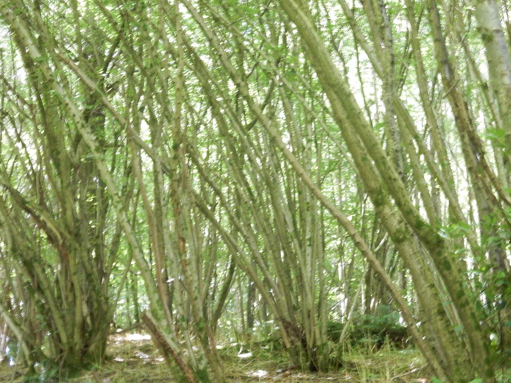 Coppice Petersfield to Cocking